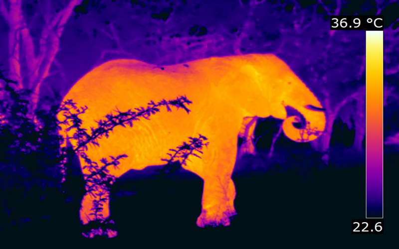 Thermal Imaging Cameras for Wildlife