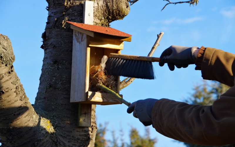 Cleaning & Maintaining Nest Boxes