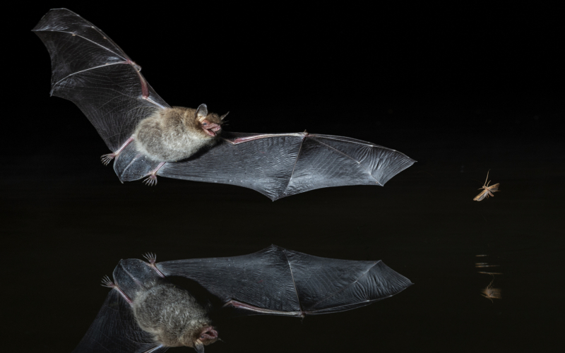Bats in the UK