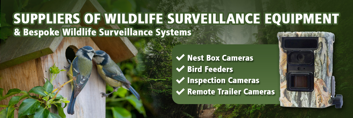 Nature Surveillance Experts  Over 10 years Experience!