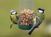 Feeding & Looking after Garden Birds during Winter