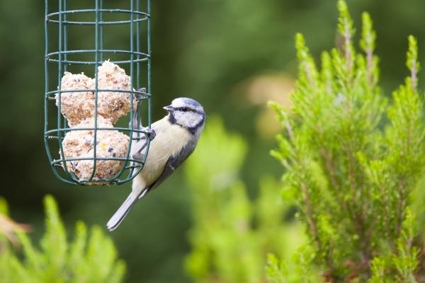 How to make Fat Balls - Garden Birds