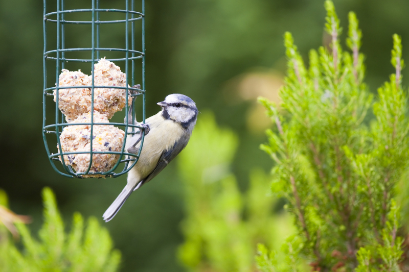 How to make Fat Balls - Garden Birds