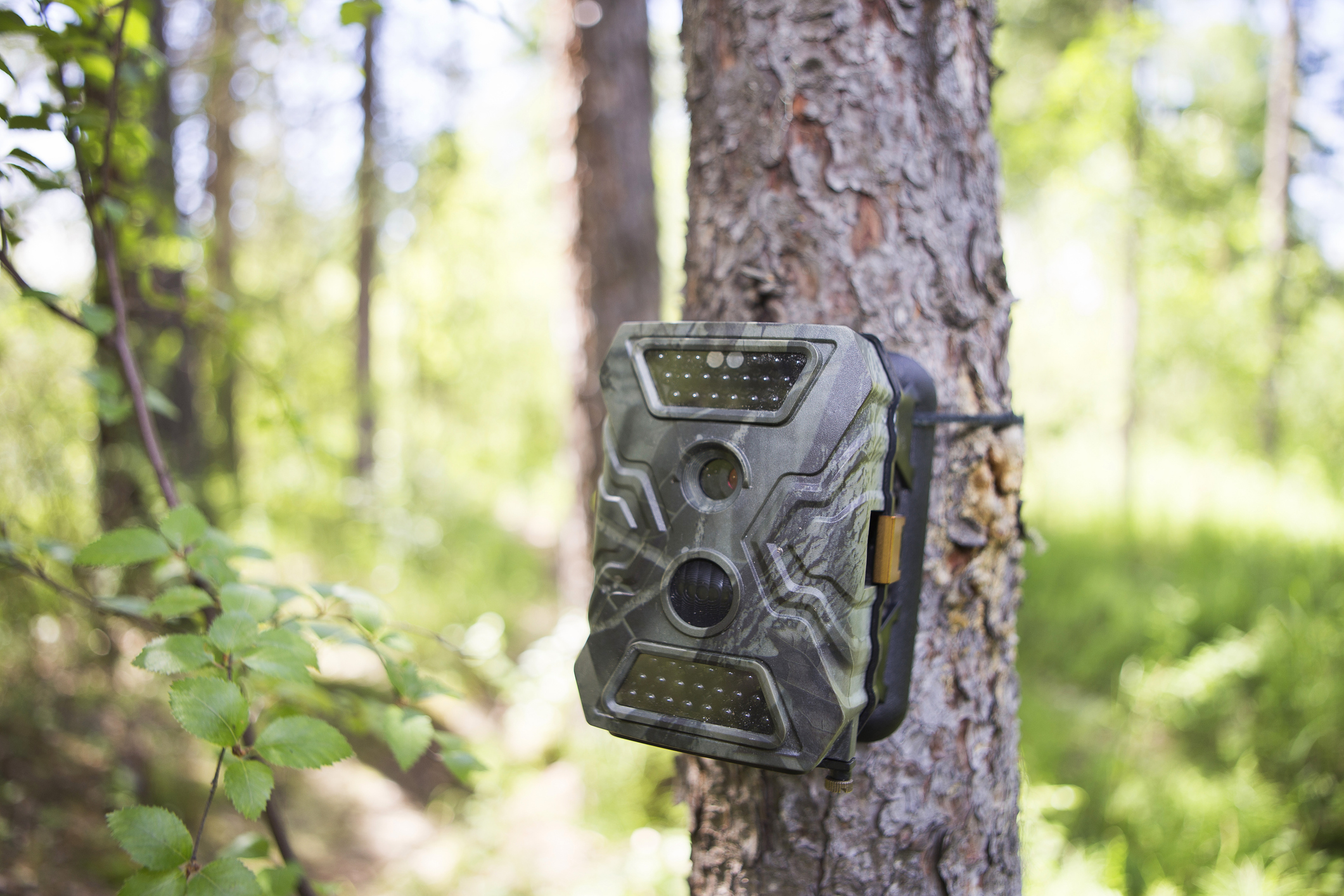 Camouflaging Wildlife Cameras
