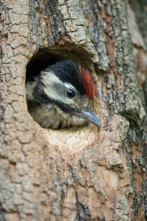 Woodpecker Outdoor Nest Camera